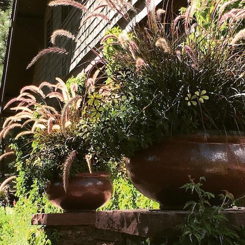 Foxglove Gardening Flagstaff Arizona Design Pots